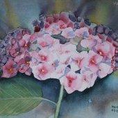 Hortensie, 30 x 22 cm