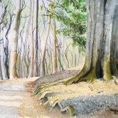 Schulenberger Wald, 30 x 22 cm